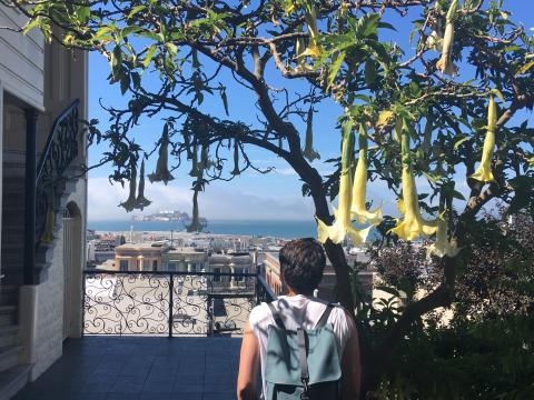 [Photo : Belle vue sur l'île d'Alcatraz avec fleurs datura]